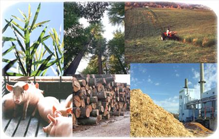 Biomass is the recyclable source of energy that comes from both living ...