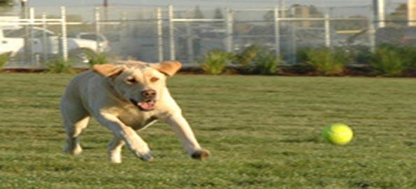 Bear Dog Park, Roseville, CA