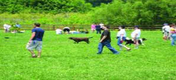 Cedar Lane Dog Park, Ossining, NY