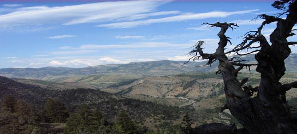Jardine-Juniper,-Juniperus-