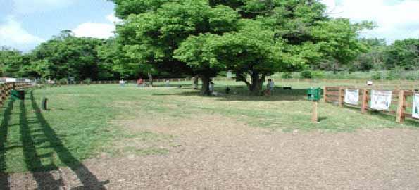 Kenton Paw Park, Covington, KY