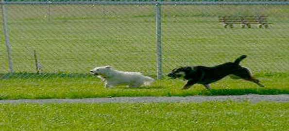 Top 10 Dog Parks in the United States