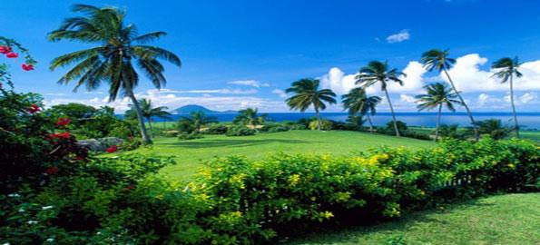 A-Tropical-Paradise