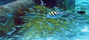Andaman-Sea-Reefs,-India