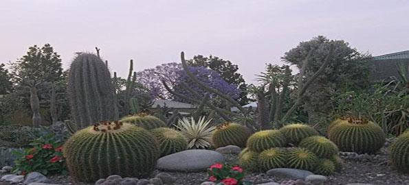 Cactus Garden, Chandigarh