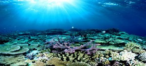 The-Great-Barrier-Reef,-Aus