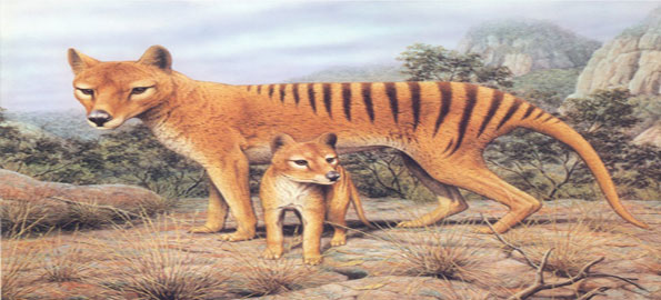 Thylacine_-The-Tasmanian-Ti