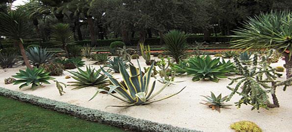 Top-10-cacti-Gardens