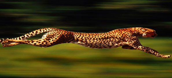 Top-10-fastest-animals-on-l