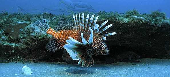 Top-10-most-visually-stunning-marine-species