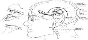 Cerebrovascular-Disease-300x136.jpg