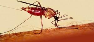 Malaria-300x136.jpg
