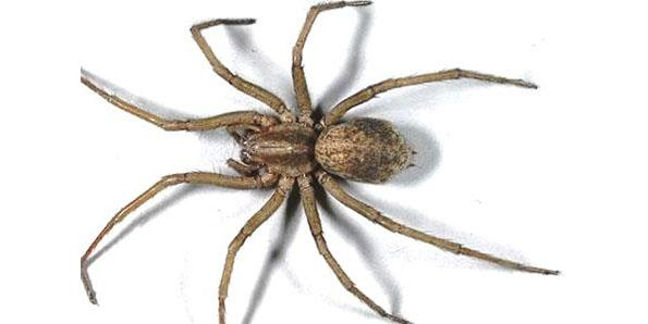 Top 10 Most Dangerous Spiders In The World - tuotuofly - 墨·色