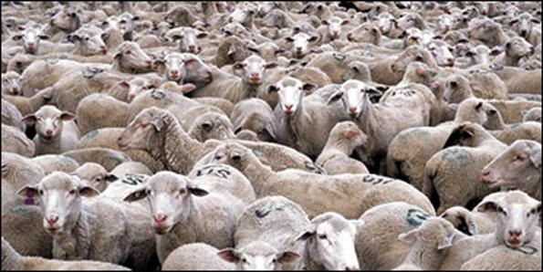 Arithmetic is a stepping stone on the road to becoming a professional sheep herder