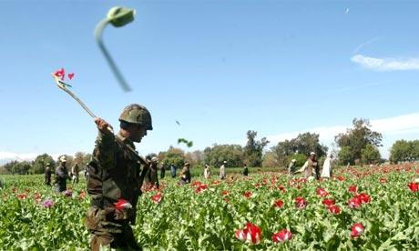Afghanistan Opium Trade