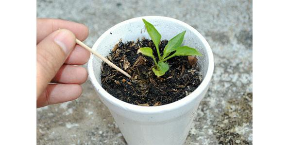 plant in a cup