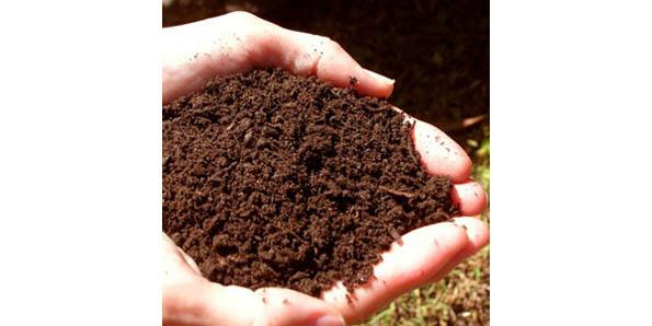 Top 10 reasons why we experience mineral deficiencies for Is soil a mineral
