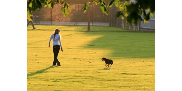 walk with your dog