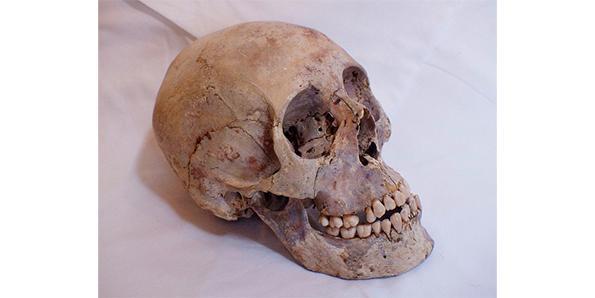 Human Skull Powder