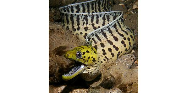 Live eels