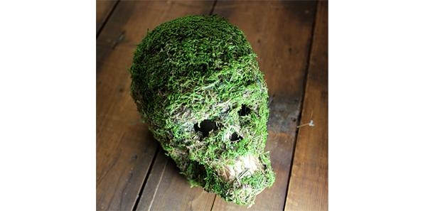 Moss has grown on the skull