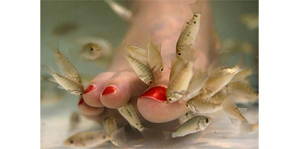 Top 10 weirdest spa treatments part 2 for Fish pedicure price
